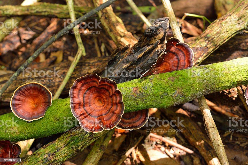 Polyporaceae stock photo