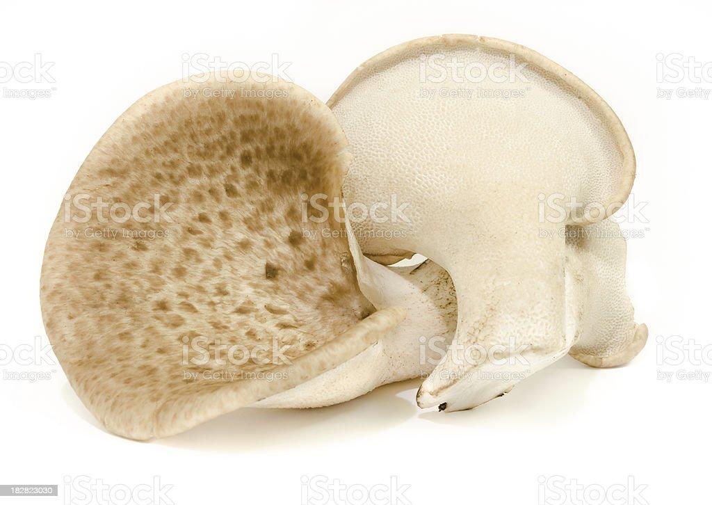 Polyporus Squamosus Edible Mushrooms stock photo