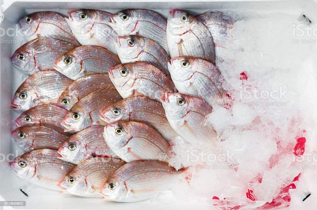 Polystyrene container of fresh fish with ice stock photo