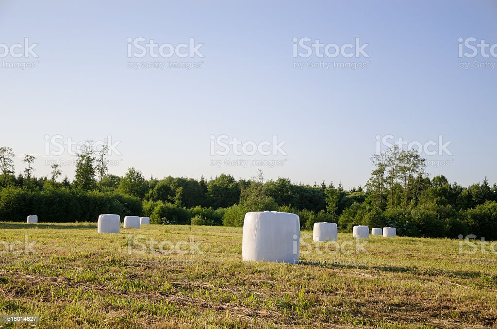 polythene wrapped grass bales fodder for animal stock photo