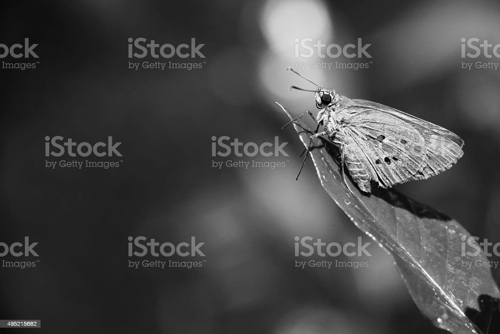Polytremis Lubricans Basking in the Sun stock photo