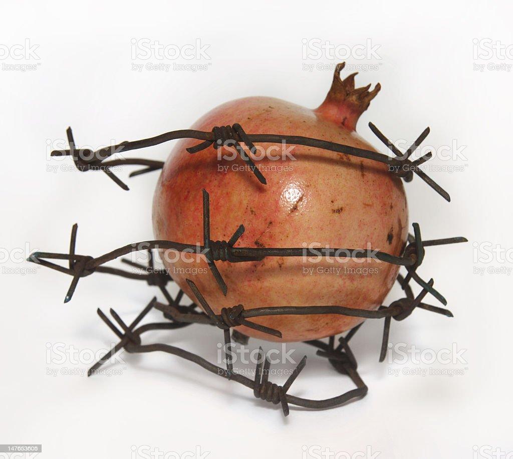 pomegranate on the white background stock photo