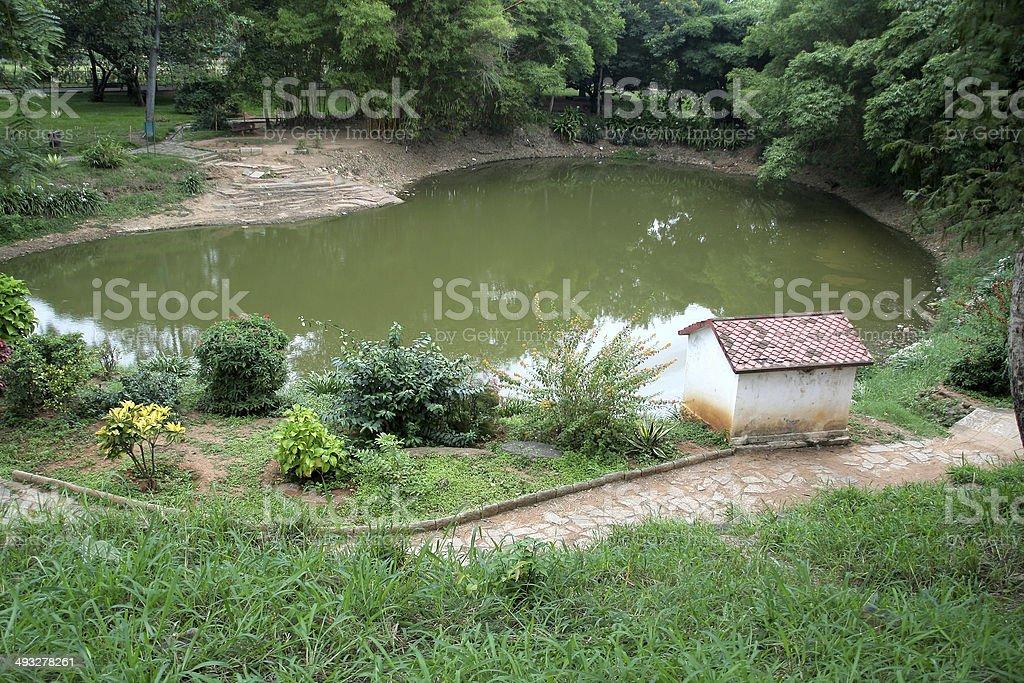 Pond amidst Greenery stock photo