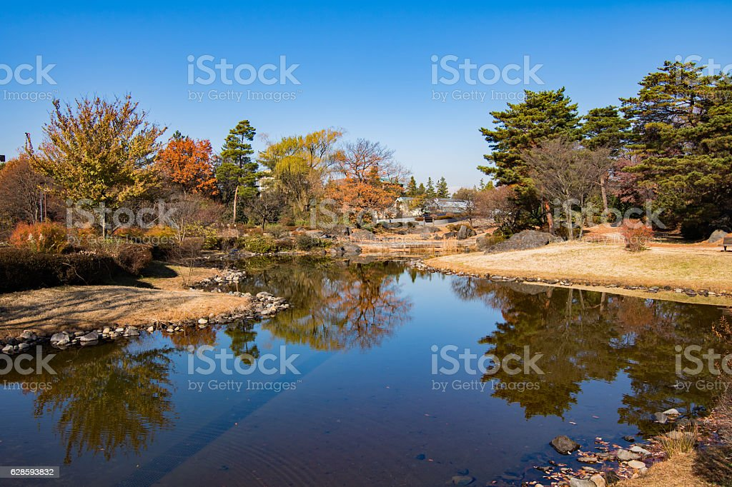 Pond and autumn leaves royalty-free stock photo
