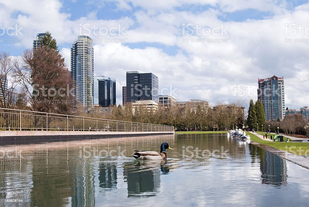 Pond and duck at Downtown Park in Bellevue, WA stock photo