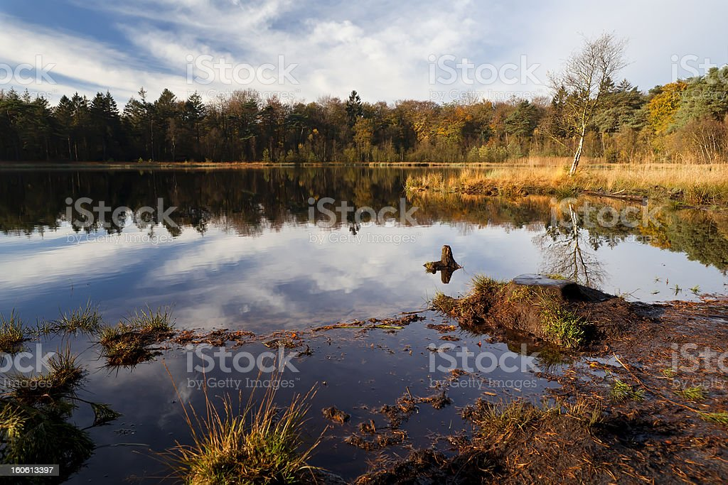 pond and forest in autumn royalty-free stock photo