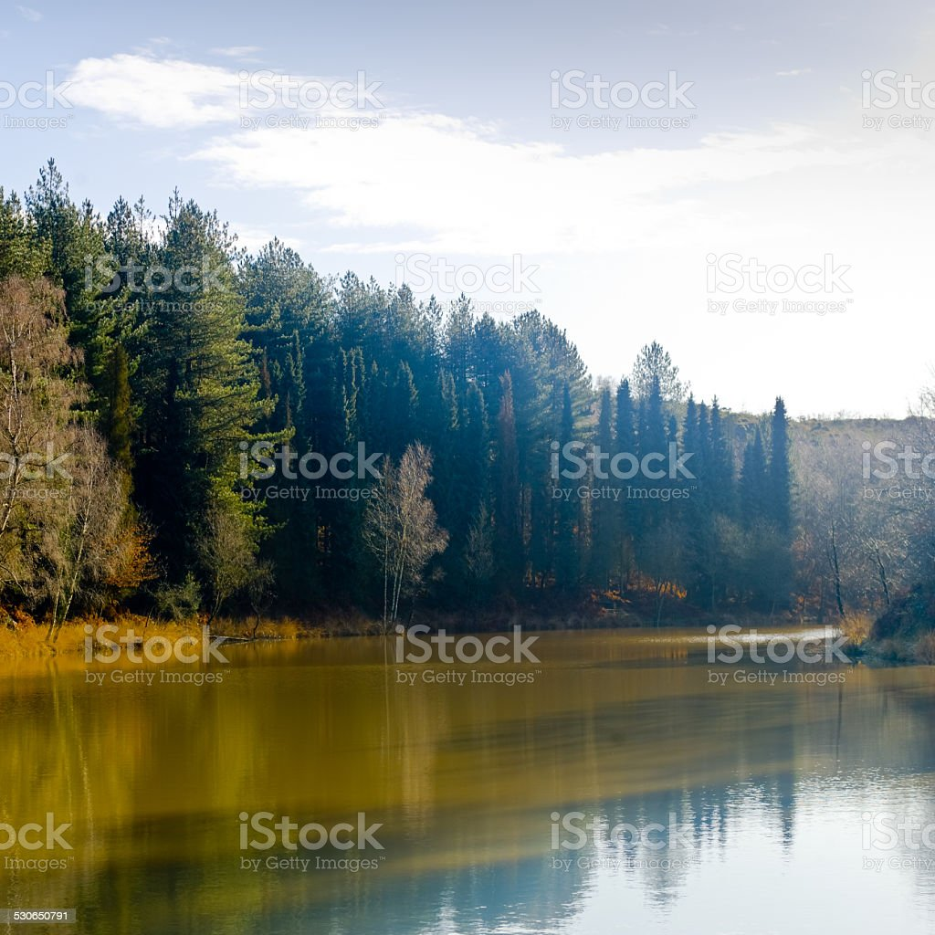 Pond and forest stock photo