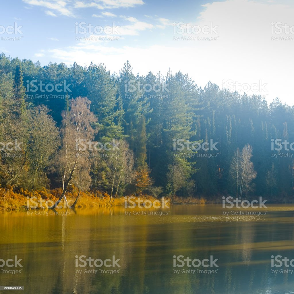 Pond and forest - Winter stock photo