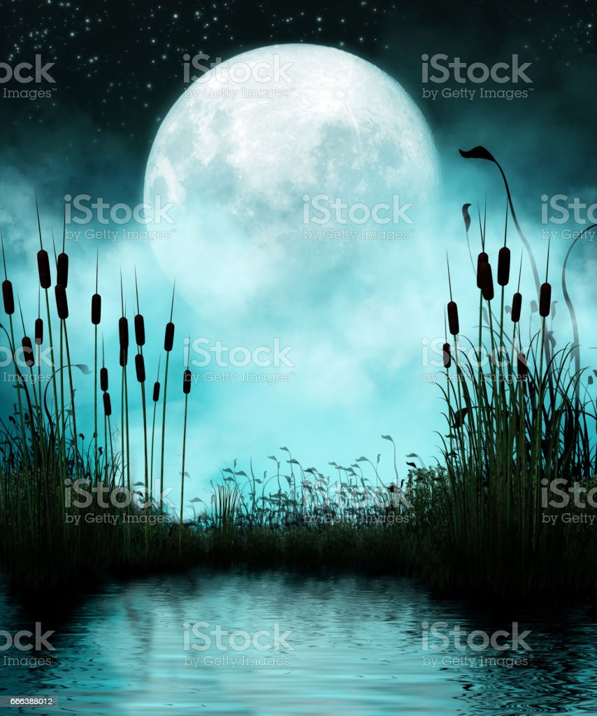 Pond and Moon at Night stock photo