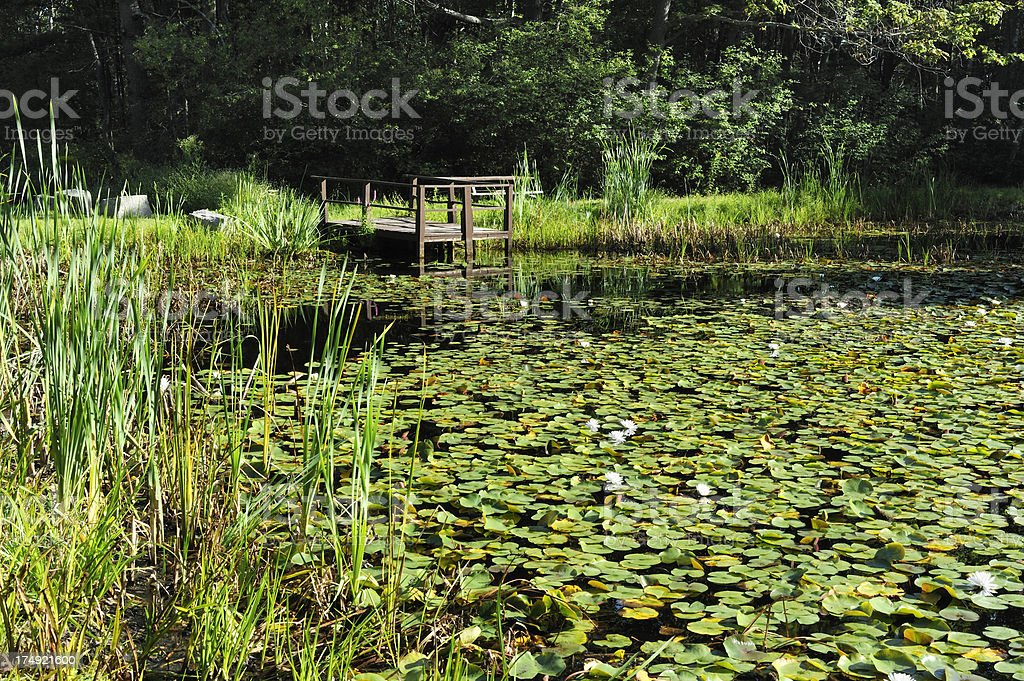 Pond and water lilies royalty-free stock photo