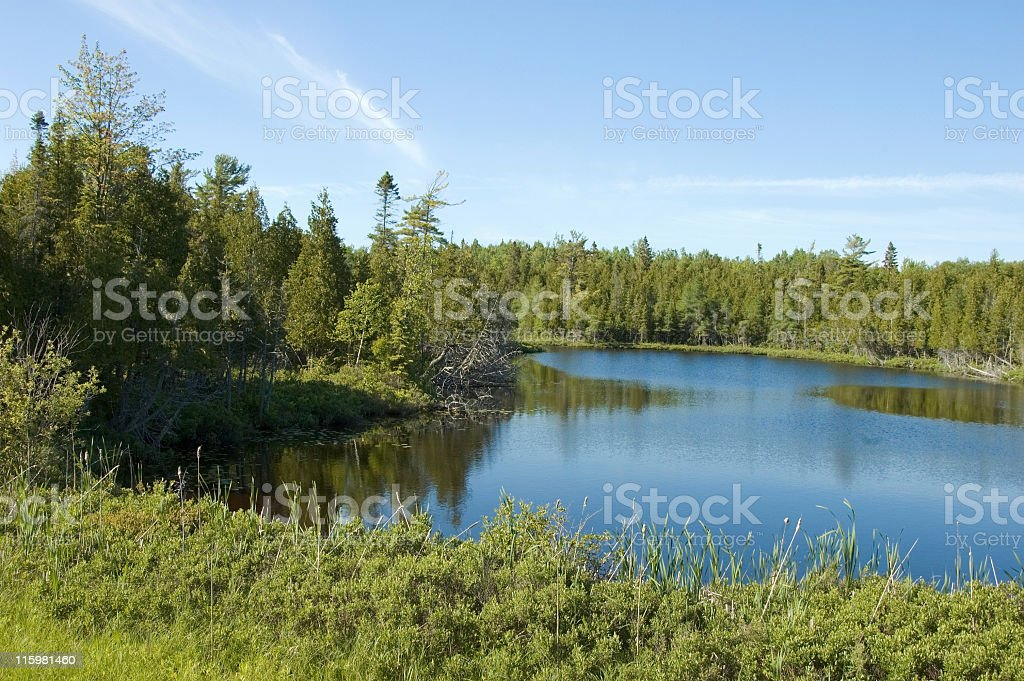 Pond and Woods, Forest Wilderness in Michigan Upper Peninsula stock photo