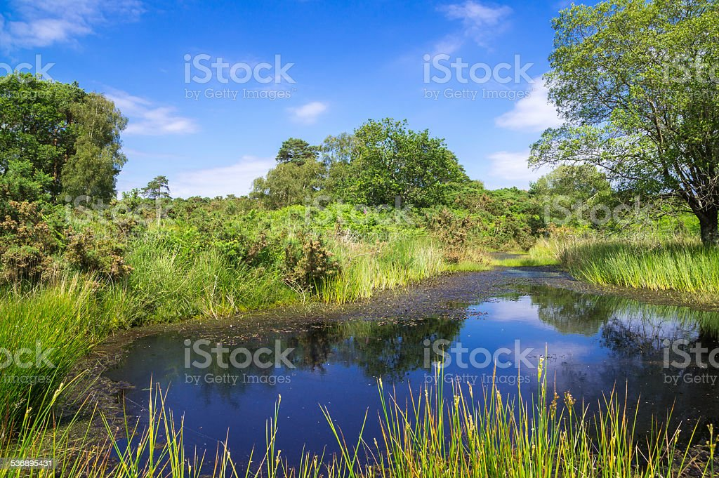 Pond at Arne in the Dorset Countryside stock photo