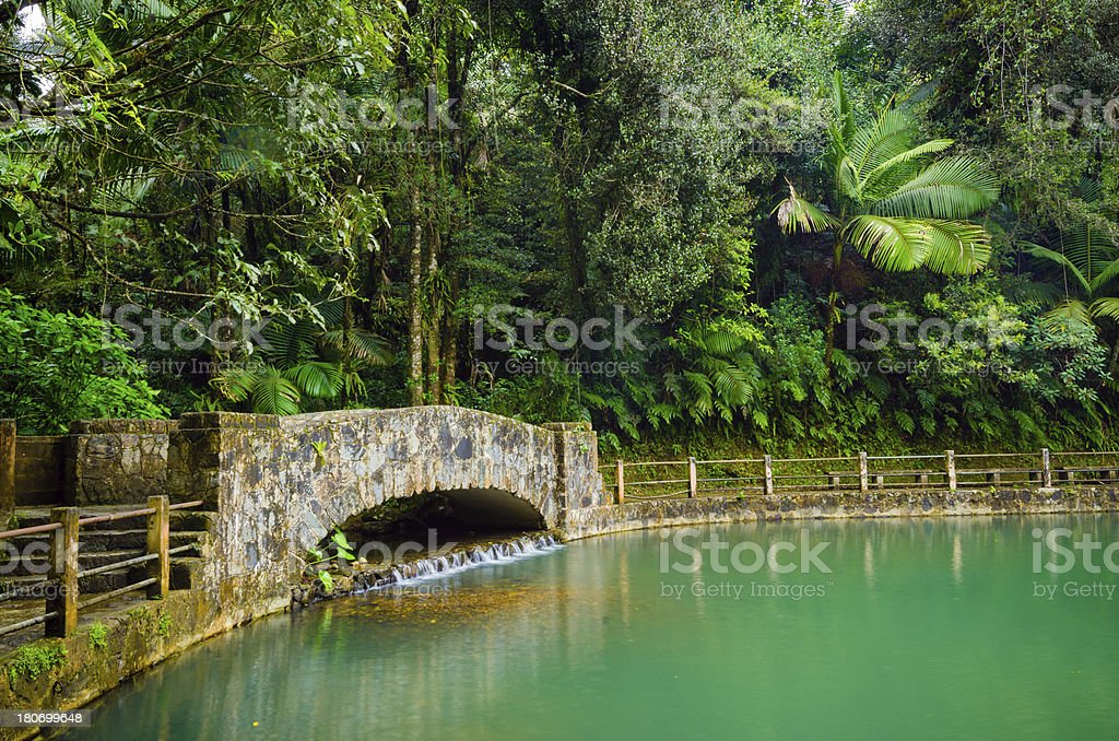 Pond at El Yunque National Forest in Puerto Rico royalty-free stock photo