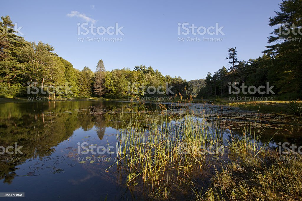 Pond at Wild Acres Park royalty-free stock photo