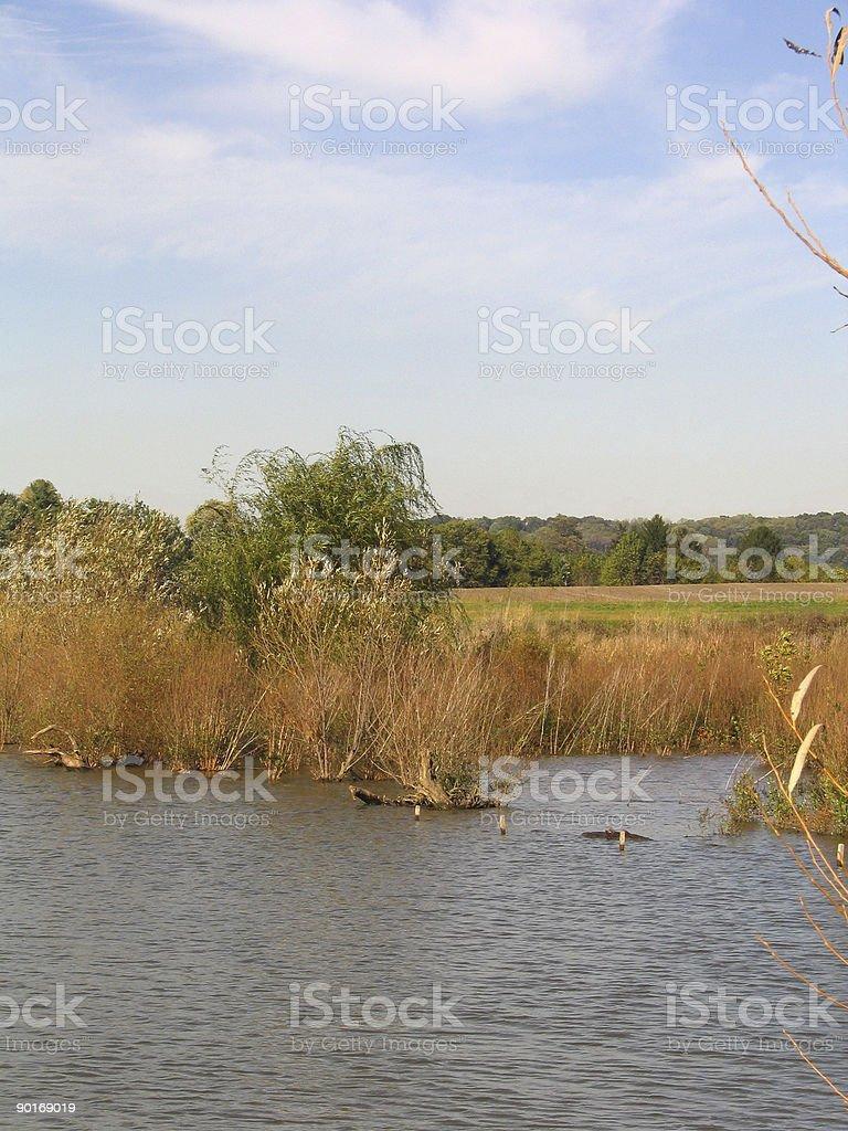 Pond Edge royalty-free stock photo