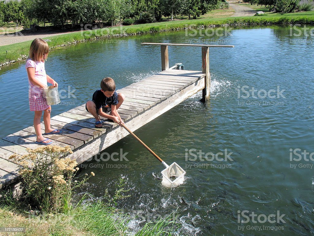 Pond fishing with a net royalty-free stock photo