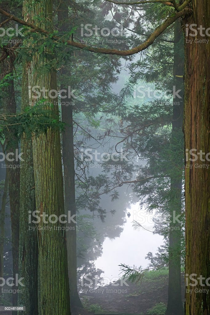 Pond in a forest stock photo