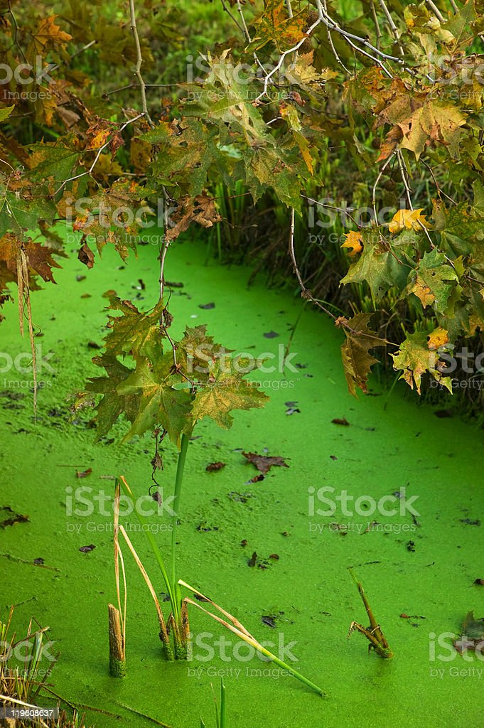 pond in autumn royalty-free stock photo