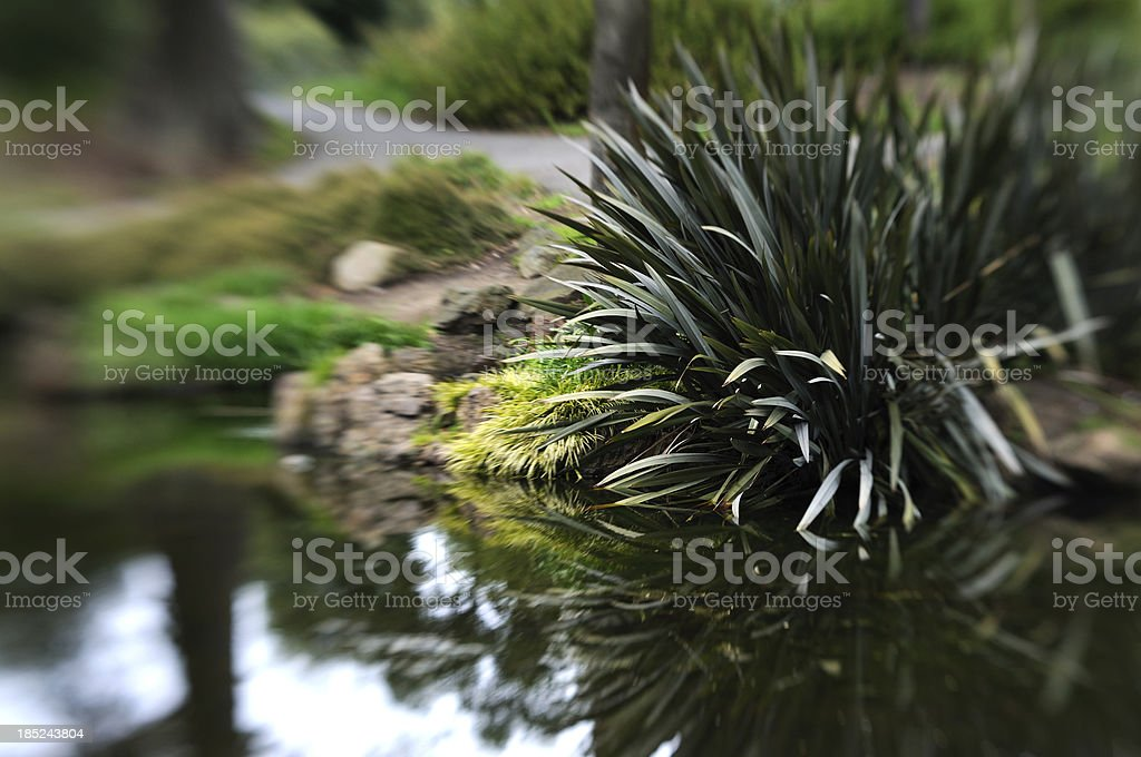 Pond in Golden Gate Park royalty-free stock photo