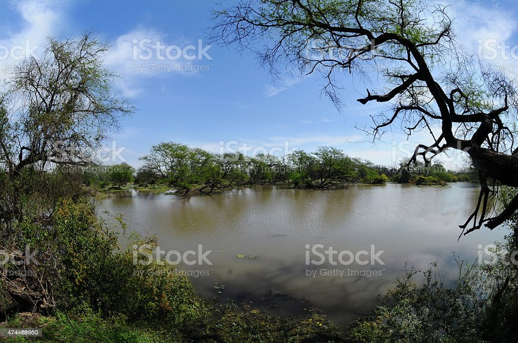 Pond in Keoladeo National Park stock photo