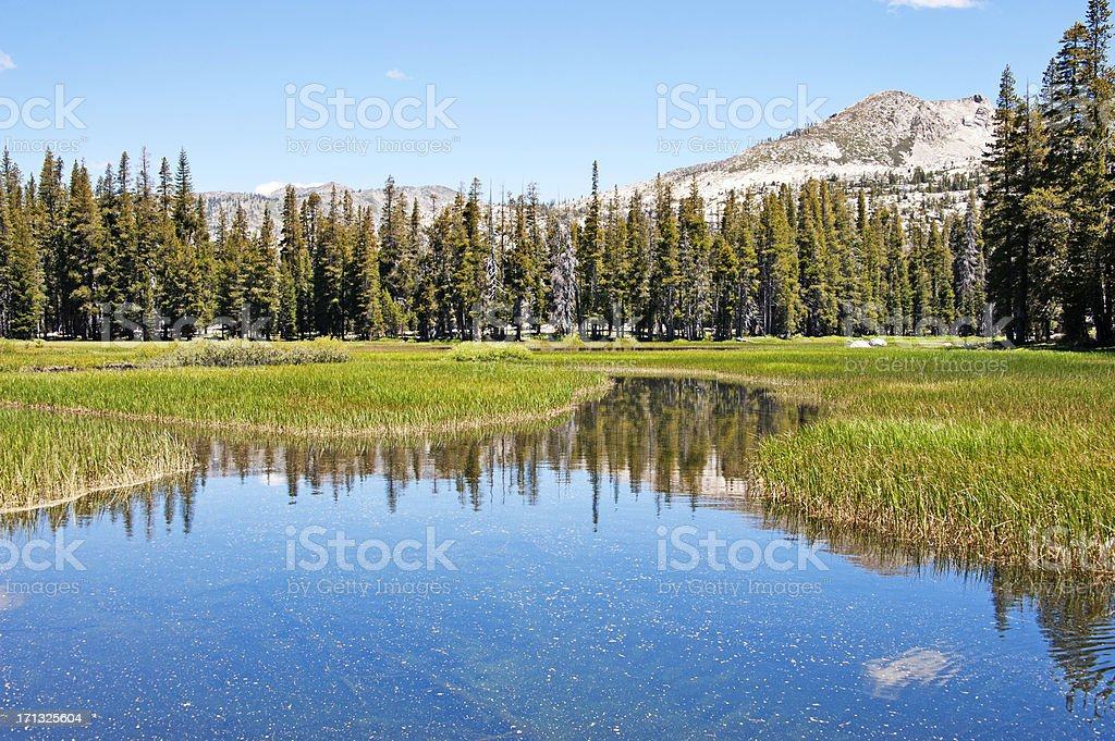 Pond in Meadow royalty-free stock photo