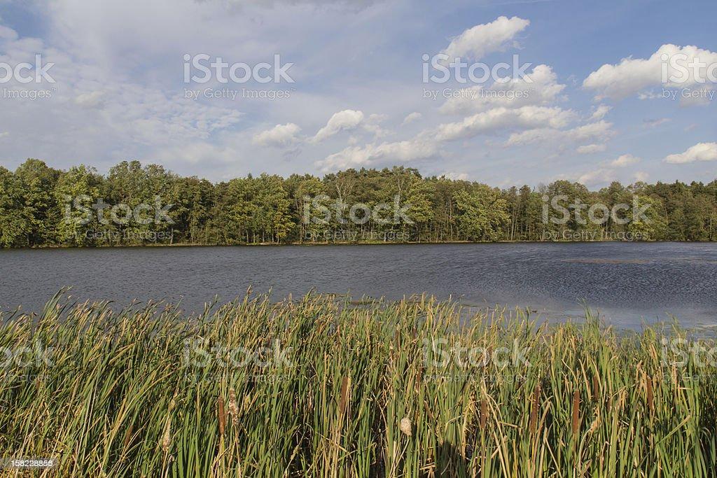 pond in spring stock photo
