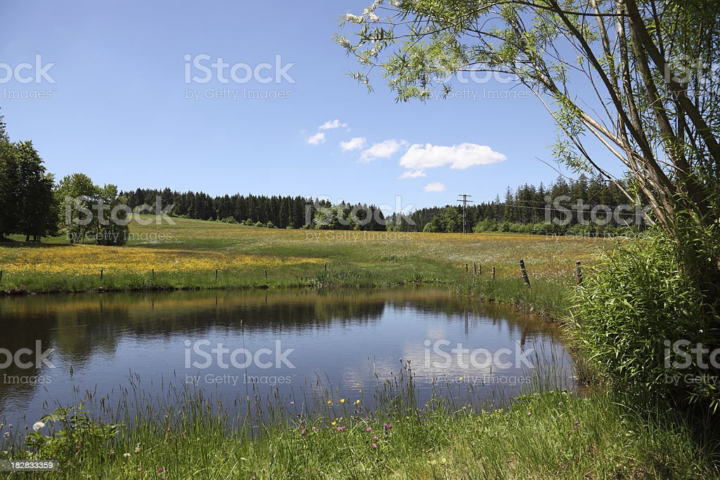 pond in summer royalty-free stock photo