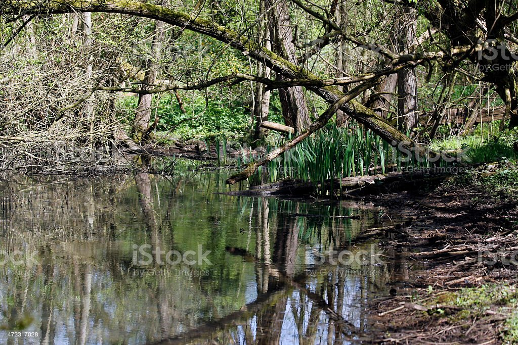 Pond in the forest stock photo