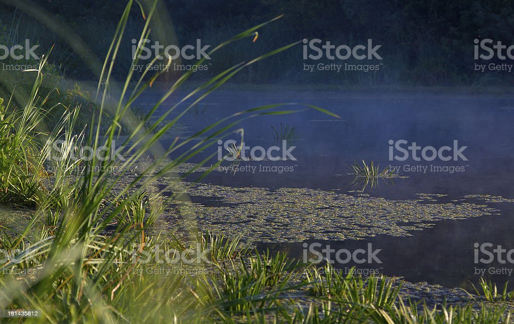pond in the morning royalty-free stock photo