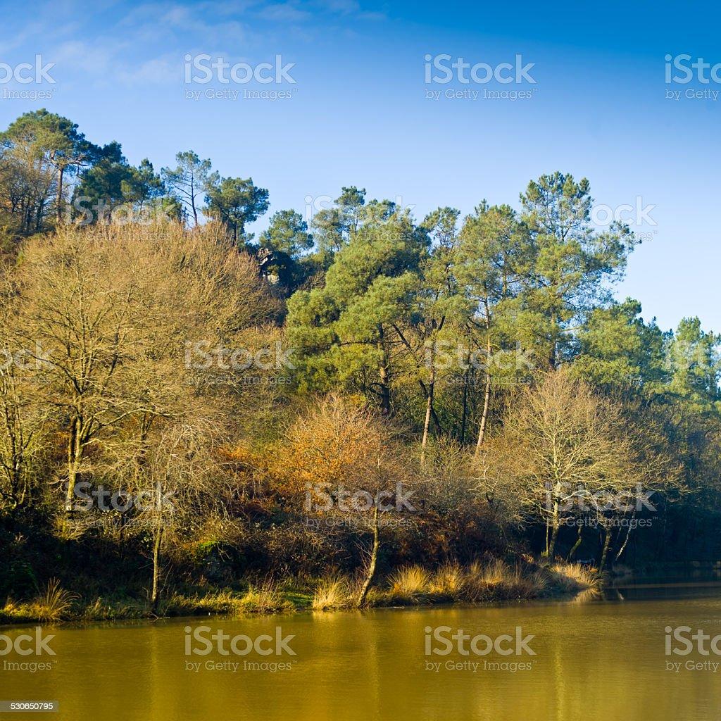 Pond in winter stock photo
