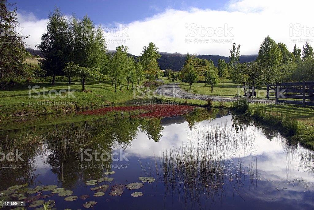 Pond Landscape royalty-free stock photo