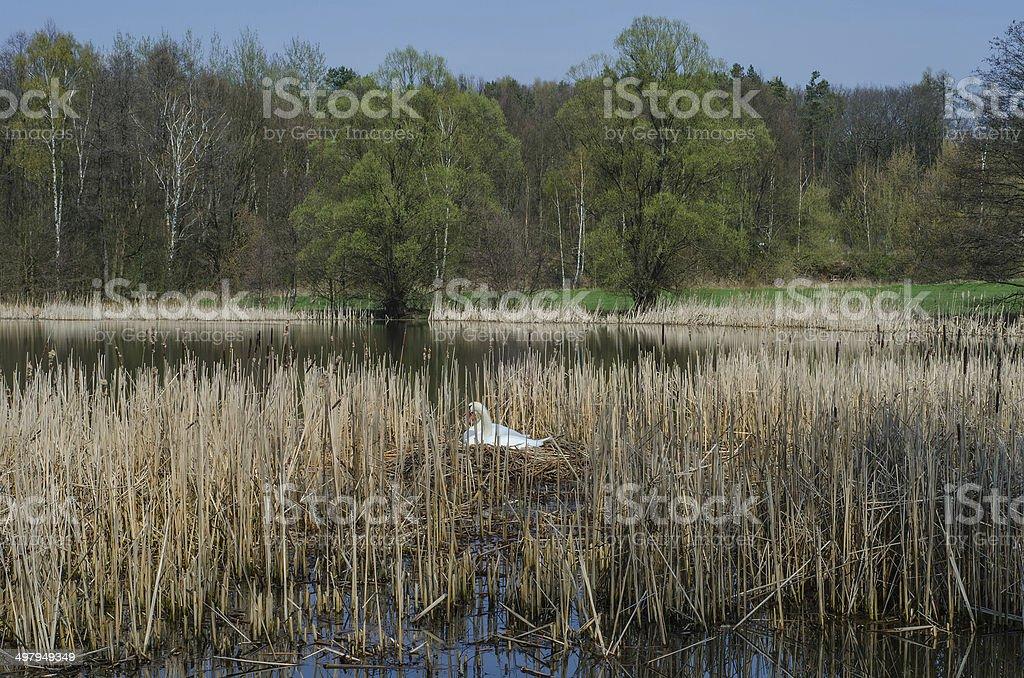 Teichlandschaft stock photo