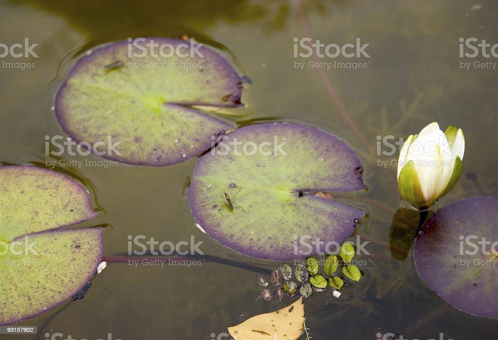 Pond life stock photo