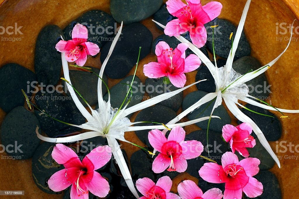 Pond of flowers royalty-free stock photo