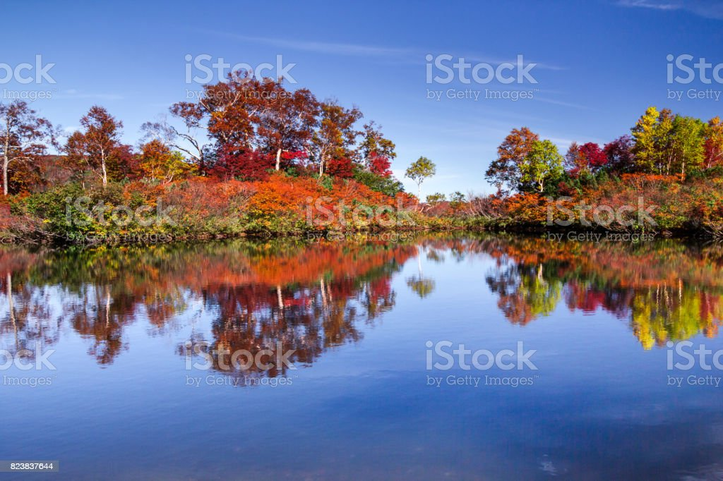 Pond of full-length mirror stock photo