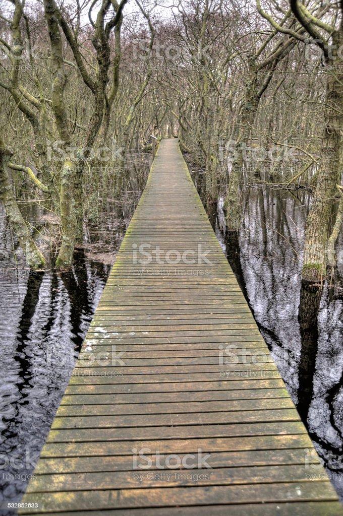 Pond on Amrum stock photo