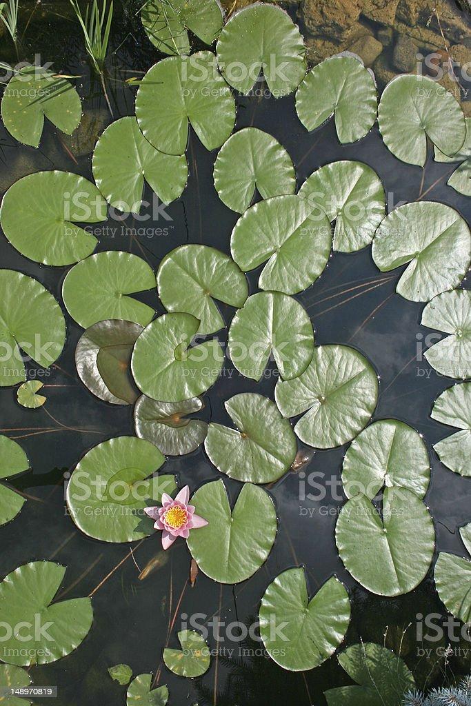 연못 royalty-free 스톡 사진