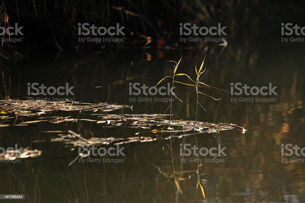 Pond royalty-free stock photo