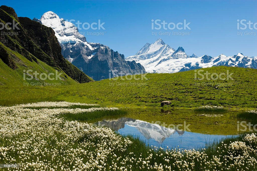 Teich stock photo