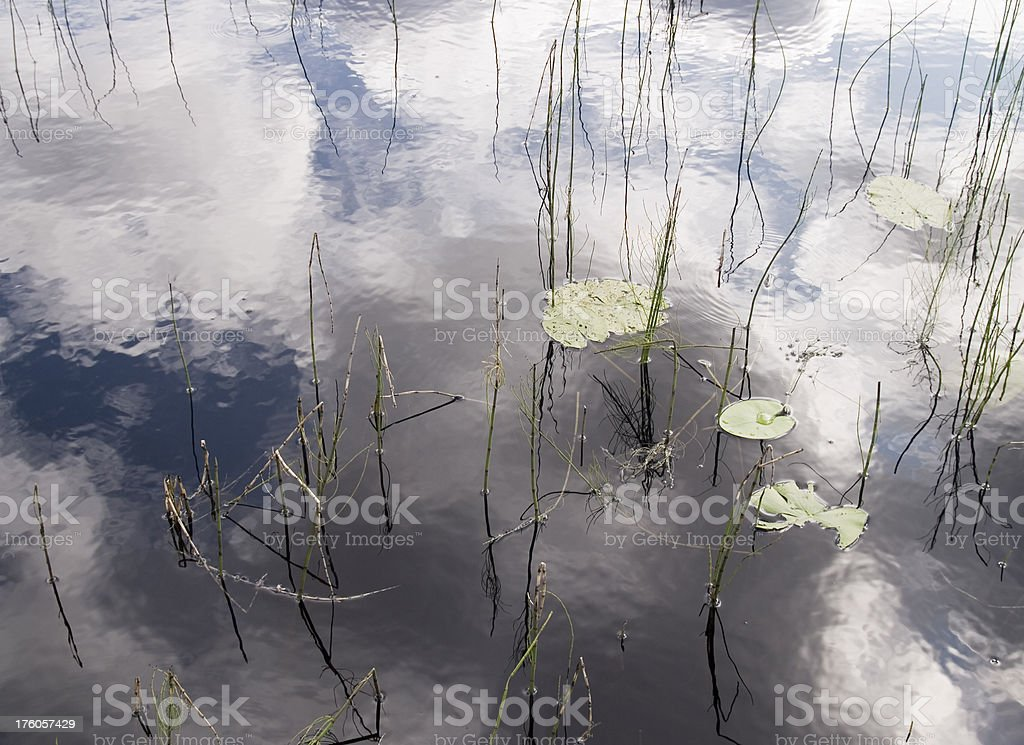Pond reflections royalty-free stock photo