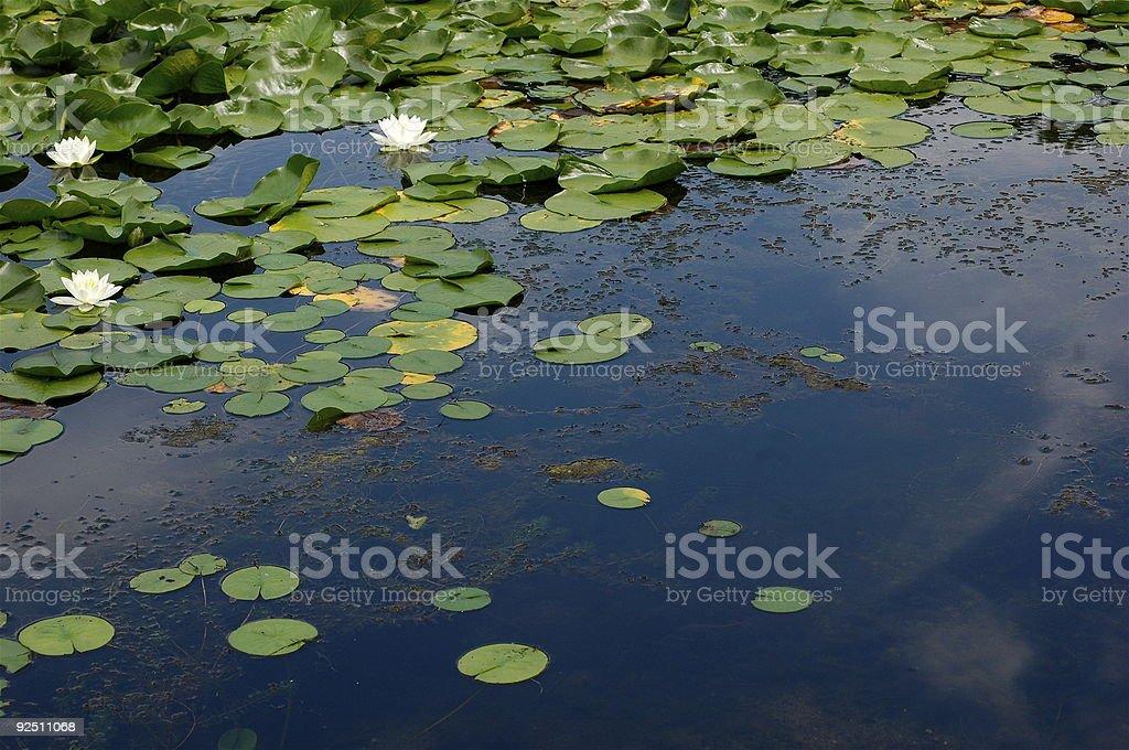 Pond Reflections stock photo