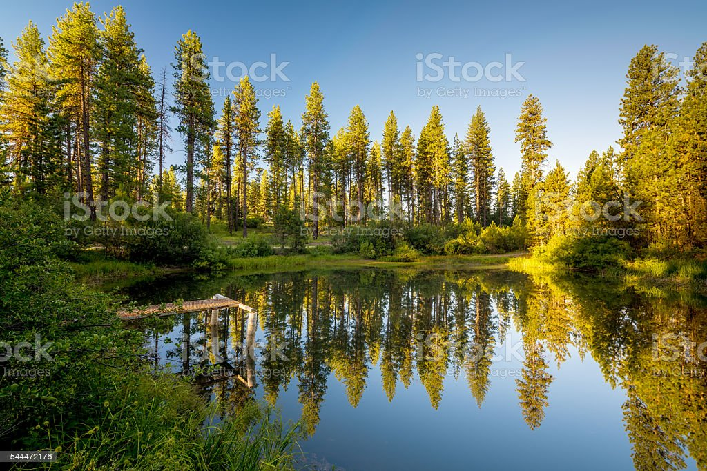 Pond surrounded by forest in the Idaho mountains stock photo