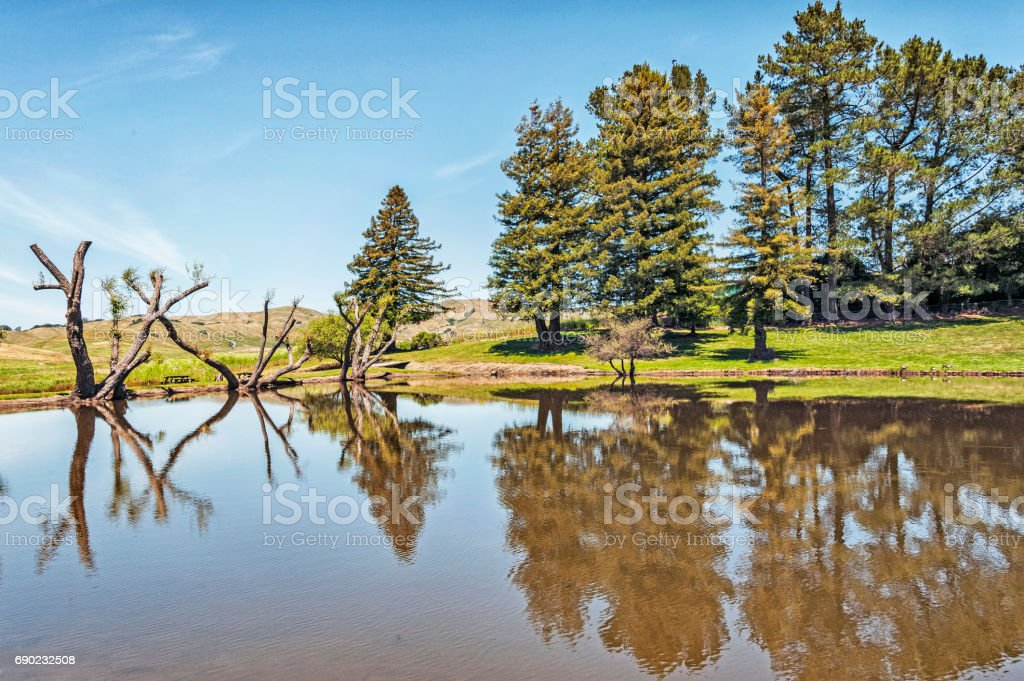 Pond with reflections Northern California stock photo