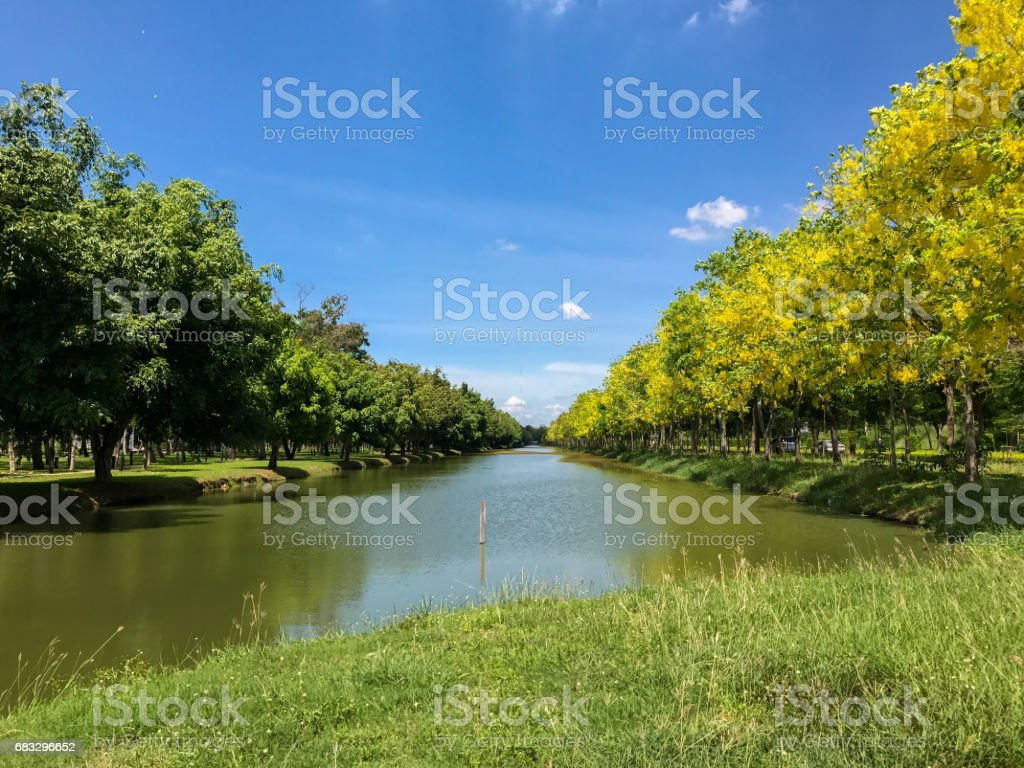 pond with tree in the park stock photo