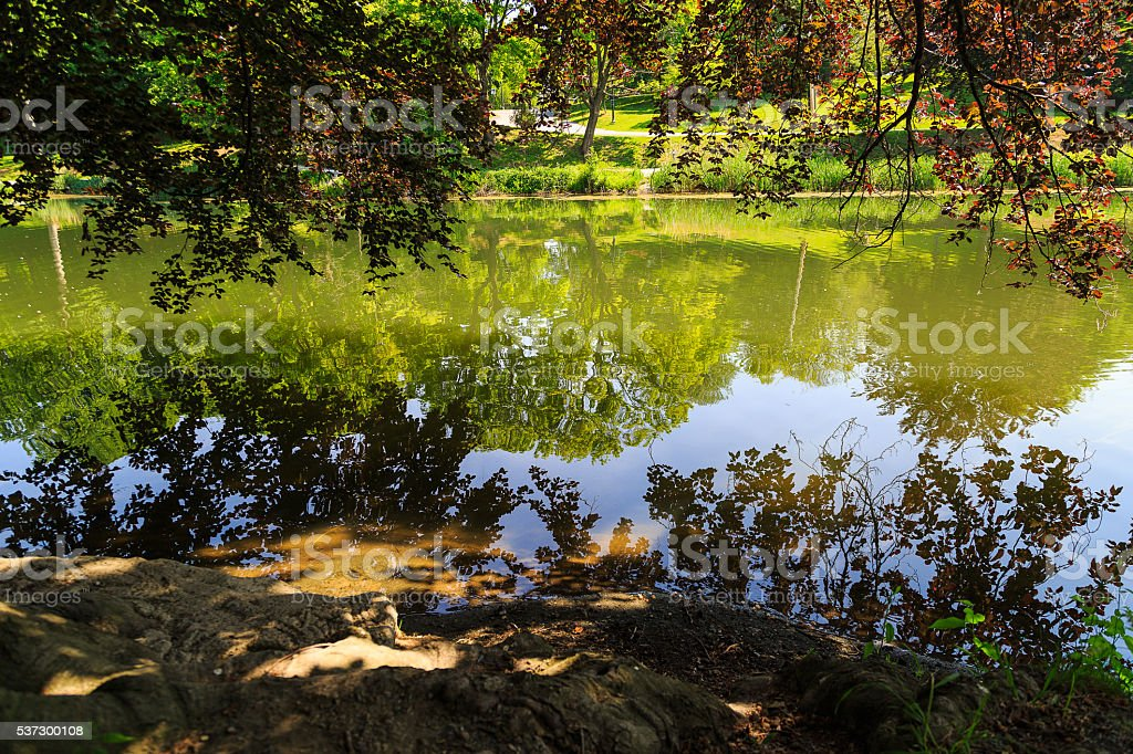 Pond with tree reflections during day at park stock photo
