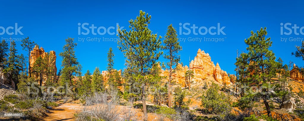Ponderosa Pines overlooked by golden hoodoos Bryce Canyon National Park stock photo