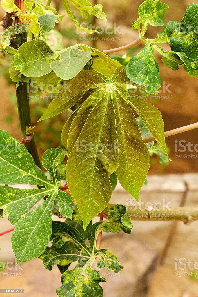 Pondu foglie foto stock royalty-free
