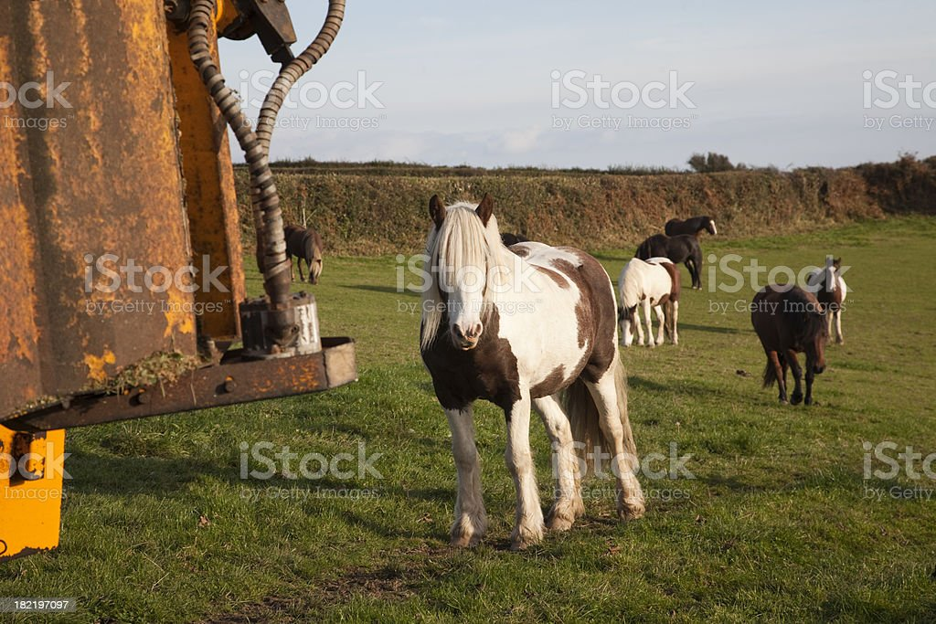 pony approaching machine stock photo