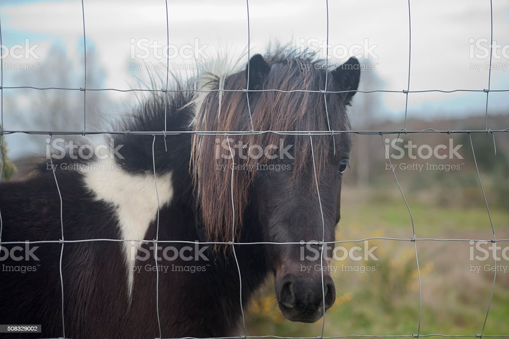Pony behind a wired fence. stock photo