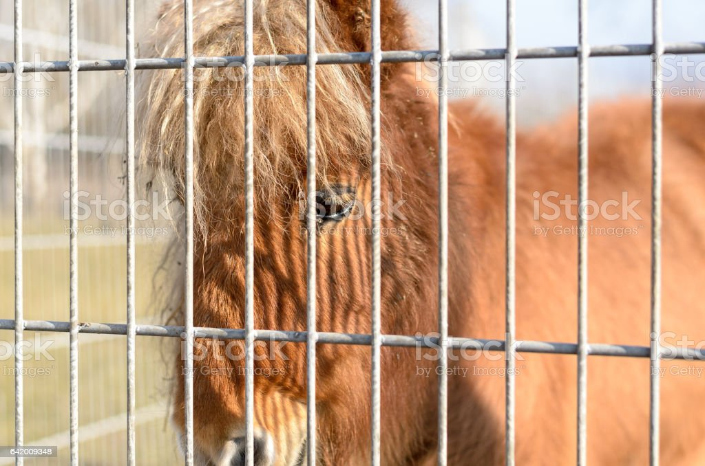 Pony horse behind fencing stock photo